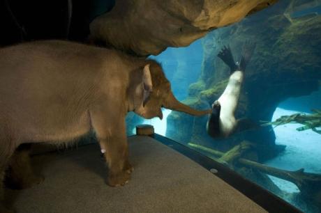 An_Elephant_Meets_A_Sea_Lion.jpg